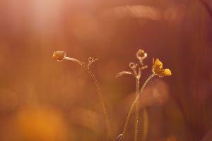 plants closeup flowers yellow flowers