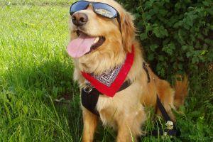 plants dog animals outdoors shades mammals tongue out