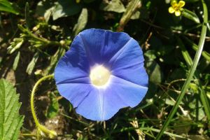 plants flowers blue flowers