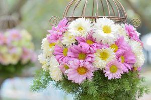 plants flowers pink flowers white flowers