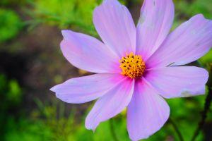plants flowers purple flowers