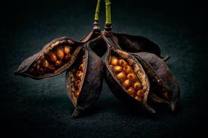 plants food macro