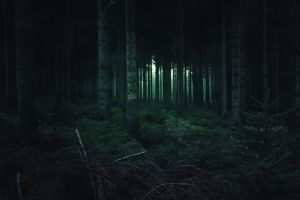 plants forest nature dark