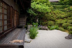 plants garden japan backyard japanese garden cats