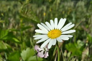 plants grass flowers white flowers