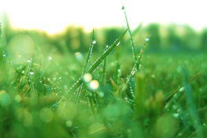 plants grass water drops