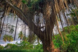 plants hdr trees jungle palm trees lianas forest branch nature leaves tropical forest