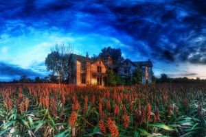plants house clouds hdr trees abandoned cabin nature