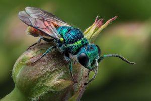 plants insect animals hymenoptera macro