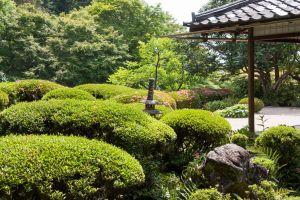 plants japanese garden garden flowers trees