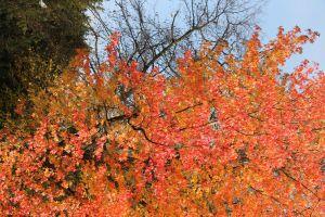 plants leaves fall