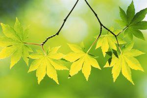 plants leaves twigs