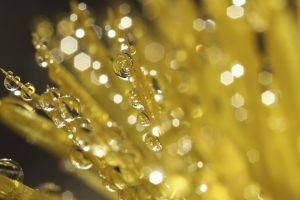 plants macro water drops dew