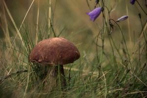 plants mushroom macro