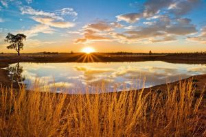 plants nature landscape sky sunlight