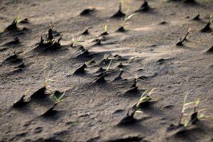 plants nature sand