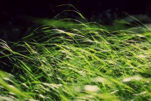 plants nature windy grass