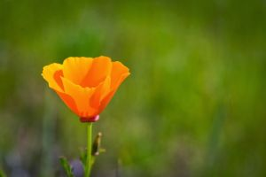 plants orange flowers flowers