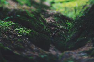 plants outdoors nature macro