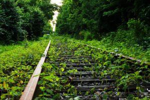 plants outdoors railroad track railway