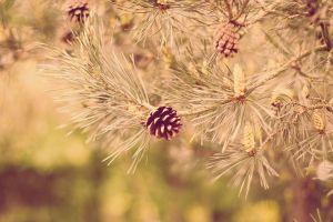 plants pine trees twigs