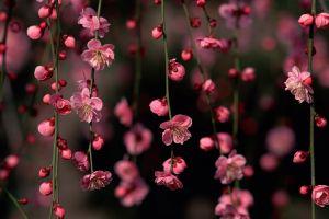 plants pink flowers flowers