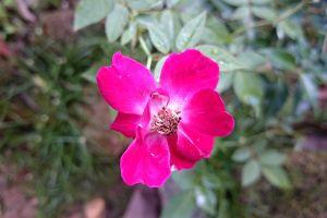 plants purple flowers flowers