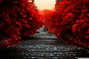 plants red outdoors path