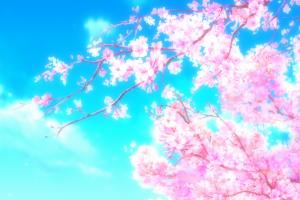 plants sky pink flowers cherry blossom twigs flowers anime