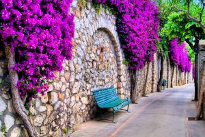 plants stones wall outdoors bench