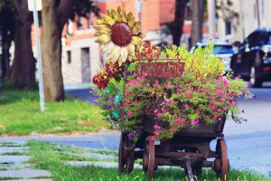 plants street flowers urban