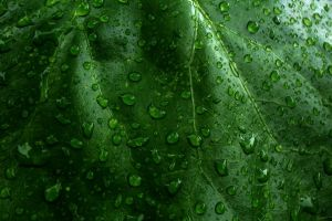 plants texture water drops leaves