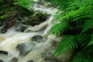 plants water landscape nature