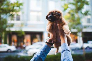 puppies animals dog