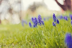 purple flowers grass plants