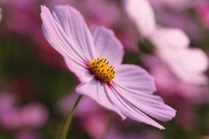 purple flowers plants flowers