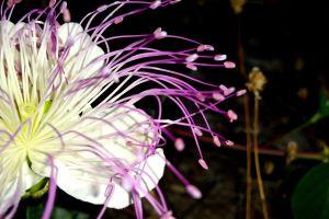 purple flowers plants white flowers