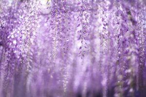 purple nature plants