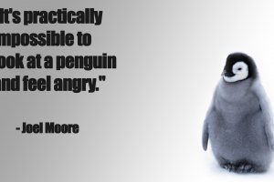 quote penguins happy angry