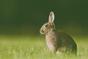 rabbits nature animals