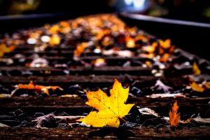 railway nature leaves