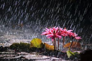 rain flowers nature plants