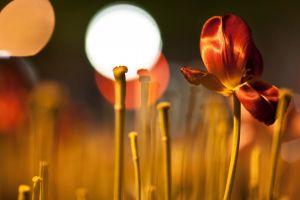 red flowers macro plants