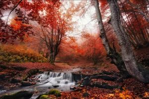 red forest fall morning trees leaves mist landscape creeks nature