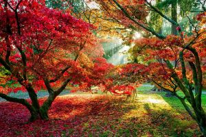 red leaves fall leaves sun rays forest path trees