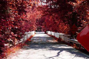 red road bridge fall
