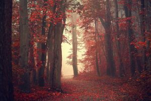 red trees path nature red leaves leaves forest mist fall landscape