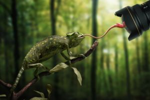 reflection camera forest nikon lens trees tongues nature humor photo manipulation chameleons animals depth of field branch flies