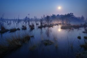 reflection landscape trees lake evening mist moonlight nature calm