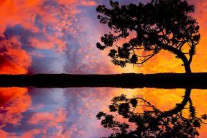 reflection sky trees landscape
